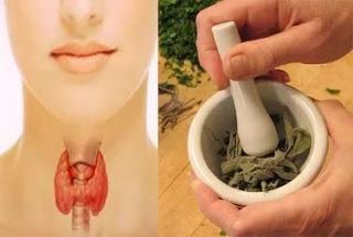 Очищаем щитовидку - рецепты …