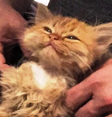 Эту кошечку забрали из приют…
