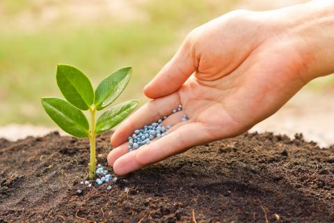 Фосфор и фосфорные удобрения в жизни растений