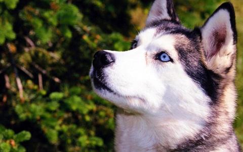 Немецкие ученые обнаружили «компасы» в глазах собак.