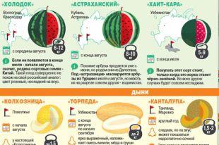 Как не ошибиться в выборе арбуза и дыни. Инфографика