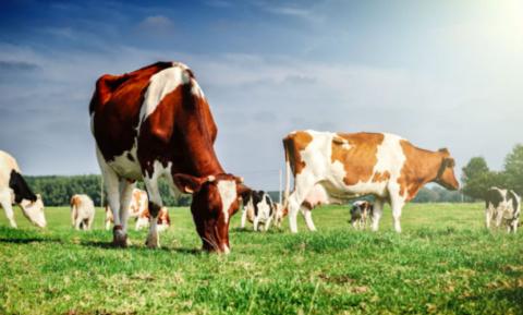 Ученые: отказ от говядины, молока и сыра поможет сохранить климат