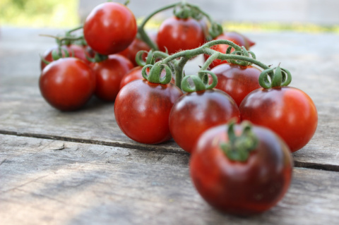 Наш урожай: томат Синие ягоды