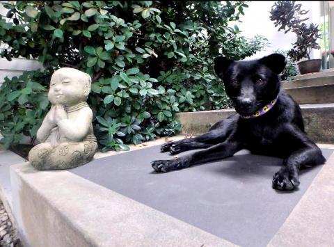 Голодавший щенок преодолел полмира, чтобы почувствовать себя в безопасности