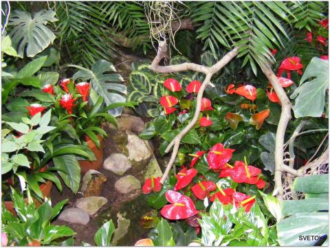 В оранжерее Ботанического сада.