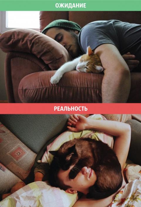 Позитив зверский. Коты: ожид…