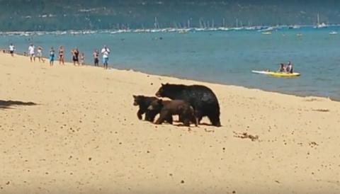 Люди и медведи вместе спасаются от жары в Калифорнии