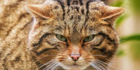 Как кошки завоевали мир