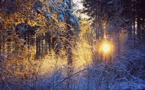Как ориентироваться в лесу (…