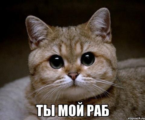 Когда коты завладели домом (8 фото)