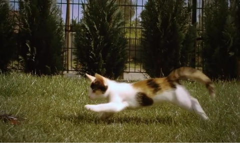 Движения котенка в замедленной съемке. Видео