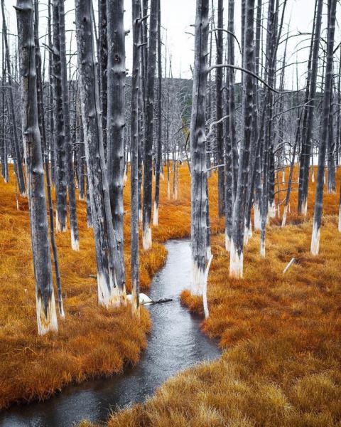 20 фото, над созданием которых потрудилась сама природа