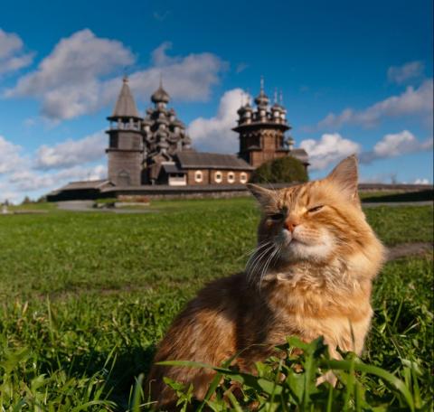 22 великолепные фотографии котов и достопримечательностей мира