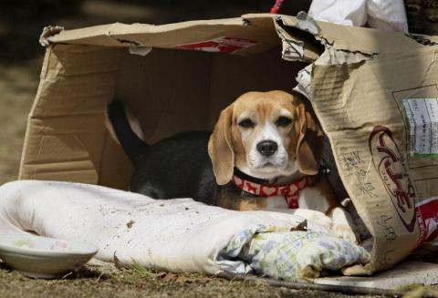 Как соцсети помогают найти потерявшихся животных: 5 счастливых историй о спасении