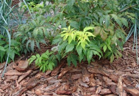 Сосновая кора для пользы садовода