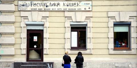 Кошачье кафе в Санкт-Петербурге