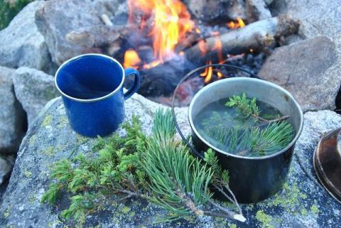 Таежный чай из хвои и еще 4 рецепта целебного напитка