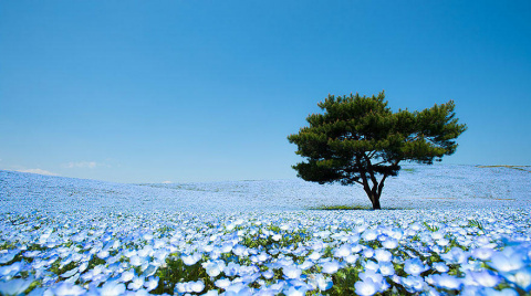 Великолепие японского парка Хитачи