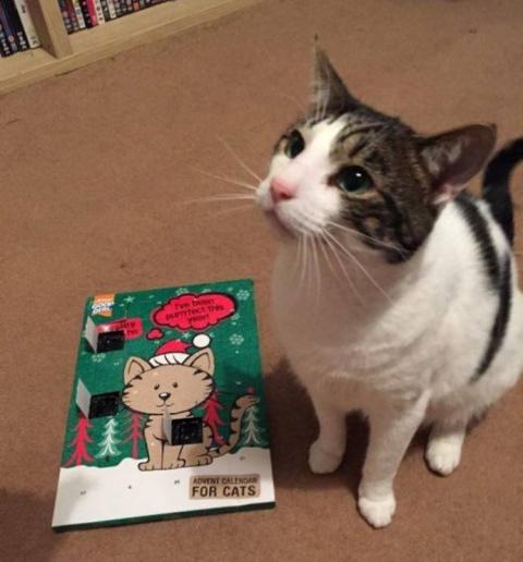 Почтальоны отказались отдавать посылку, отправленную на имя кота