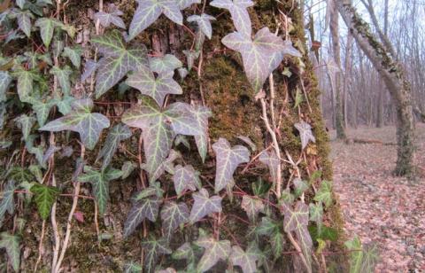 10 домашних рецептов быстрой помощи при ожогах ядовитыми растениями