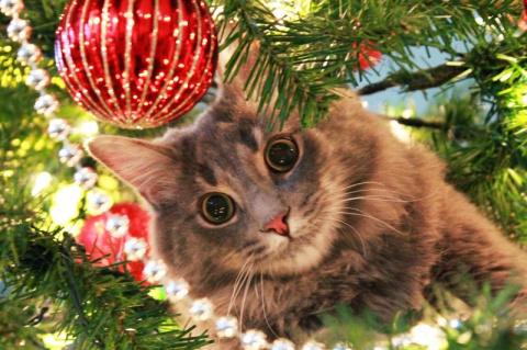 Котейки, которые помогают наряжать елку и делают Новый год незабываемым