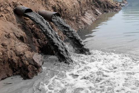 В Ярославской области фекалиями смыло 30 бобровых хаток