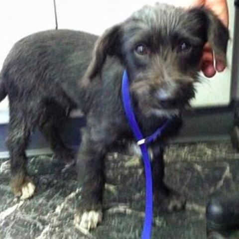 Этот испуганный щенок многое пережил, живя на улице. Но теперь у него есть любящая семья
