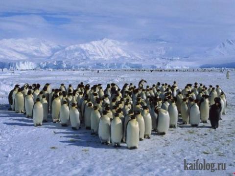 В стране Пингвиния