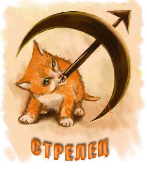 Кошачий гороскоп. Кошка Стрелец