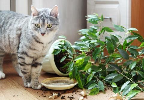 КОШКИН ДОМ. Как защитить растения от кота