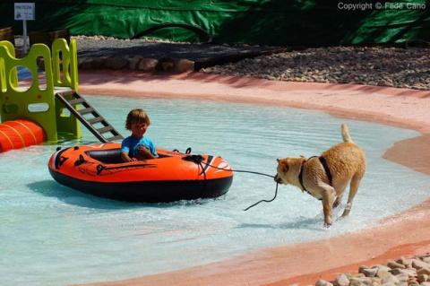 Аквапарк для собак