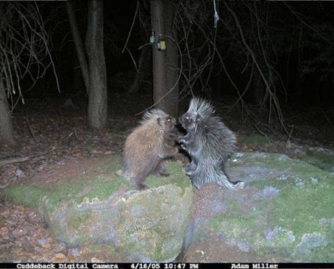 Вот что удалось запечатлеть фотоловушкам в лесу ночью. Некоторым кадрам до сих пор нет объяснения