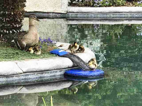 Это гениальное и простое изобретение способно спасать животных от ужасной смерти