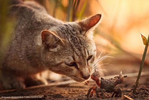 Солнечные кошки учат людей м…