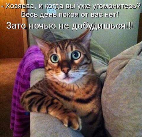 юмор, котоматрицы