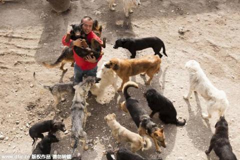 Миллионер из Китая продал всё имущество, чтобы спасти собак от бойни