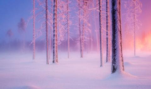 Зимнее безмолвие одиноких пейзажей: 12 мгновений «Волшебного леса»