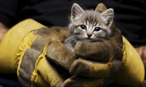 12 операций по спасению животных в гифках