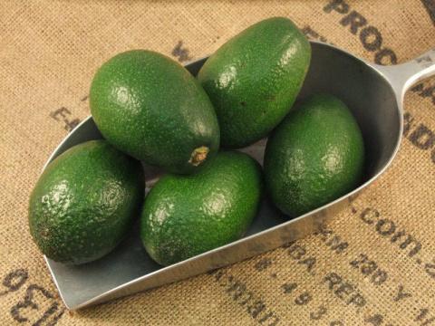 13 причин употреблять авокадо каждый день