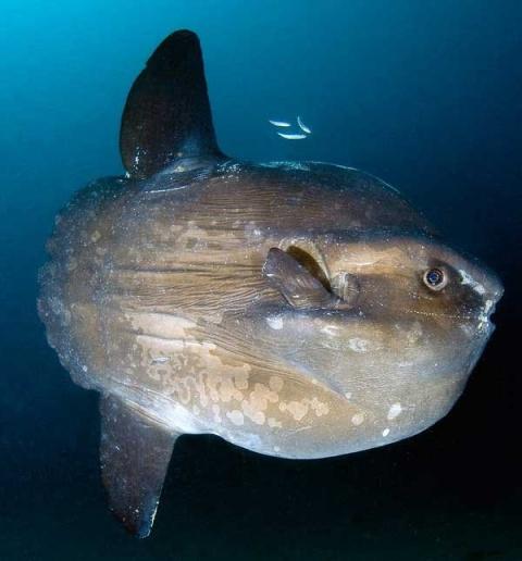 Ученые доказали, что рыбы обладают сознанием и могут испытывать эмоции