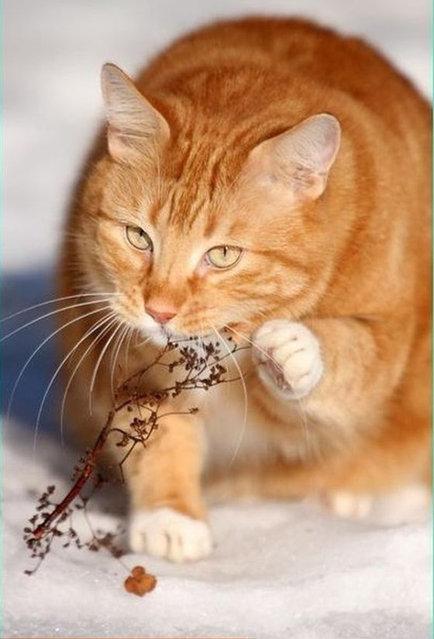 Писатели и кошки)))