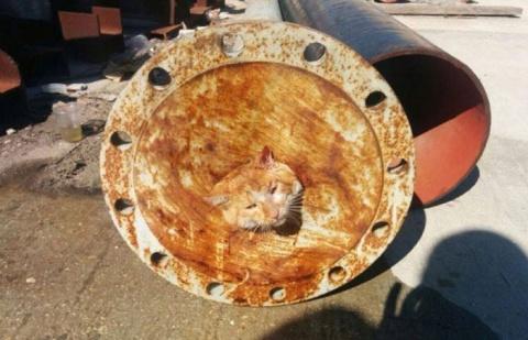 Спасение одной котейки (11 фото)