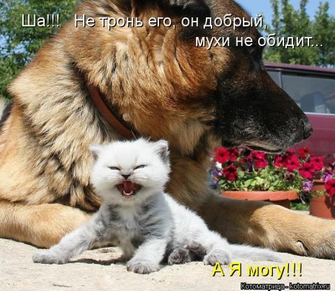 Улыбнитесь. Попади мне в рот…
