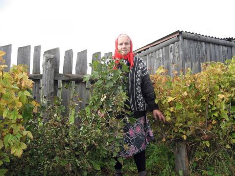 Растет смородина-старушка: куст большой, а ягод кружка