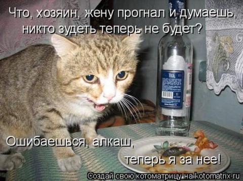 Котэшки говорят...
