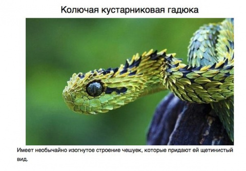 10 животных, о которых вы не знали.