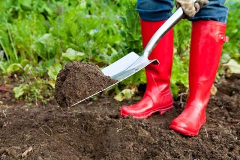 Используем плодородную лесную почву на дачном участке