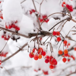 Уход за садом зимой