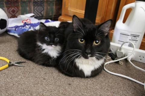 15 котов и их очаровательные…