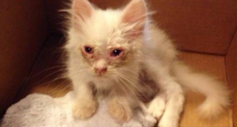 Спасенный котёнок удивил хоз…